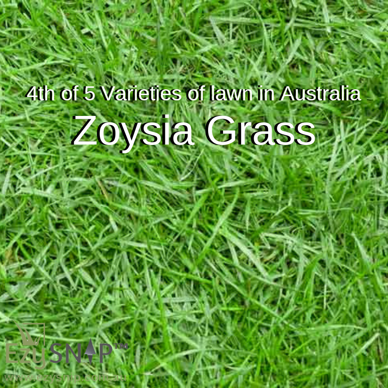 Varieties Of Lawn In Australia