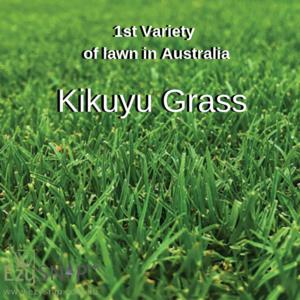 Varieties Of Lawn In Australia